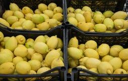 Limoni freschi, gialli, succosi Fotografia Stock Libera da Diritti