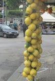 Limoni giganti in Italia del sud Immagini Stock