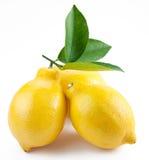Limoni maturi della foto di alta qualità su un bianco Fotografia Stock Libera da Diritti