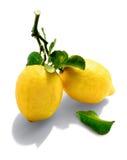 Limoni naturali Fotografia Stock