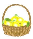 Limoni succosi freschi del raccolto generoso in un canestro La frutta è saporita e fragrante L'ossequio raffinato è buono per sal illustrazione vettoriale