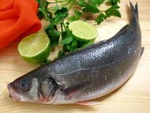 limonki bass morza fotografia stock