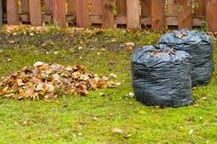 Limpando as folhas caídas no país imagens de stock