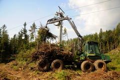 Limpando a floresta velha Imagens de Stock