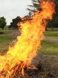 Limpando a grande pilha dos ramos com uma fogueira Imagens de Stock Royalty Free
