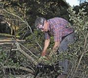 Limpando a jarda após uma tempestade imagens de stock