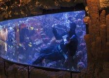 Limpando o aquário Fotografia de Stock