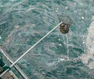Limpando o lixo do mar fotografia de stock