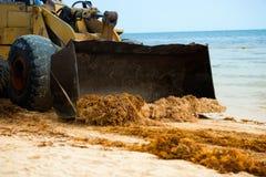 Limpando a praia das algas com um trator e um descarregador Foto de Stock