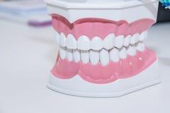 Limpe a dentadura dos dentes, corte dental do dente, do modelo do dente, e dos instrumentos da odontologia no escritório do ` s d Fotografia de Stock Royalty Free