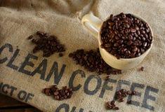 Limpe feijões de café orgânicos Fotos de Stock Royalty Free