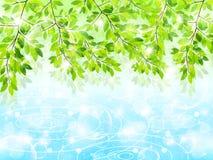 Limpe ilustrações verdes frescas do fundo Fotografia de Stock
