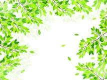 Limpe ilustrações verdes frescas do fundo Fotos de Stock Royalty Free