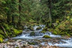 Limpe a mola do córrego da montanha em Zakopane, Polônia foto de stock royalty free