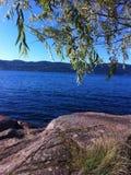 Limpe o lago na mola verde fotos de stock