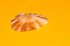 limpet Стоковое Изображение RF