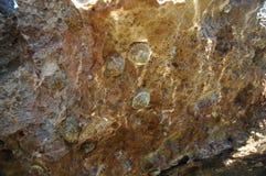 Limpets auf Felsen Lizenzfreie Stockfotografie