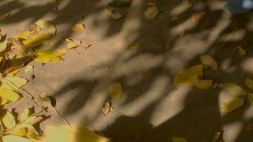 Limpeza da folha no jardim video estoque