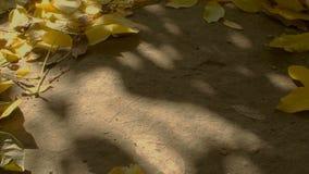 Limpeza da folha no jardim vídeos de arquivo