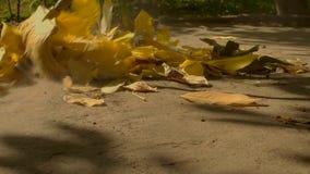 Limpeza da folha no jardim filme