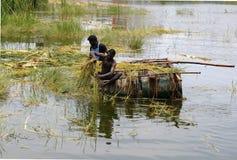 LIMPEZA DA LAGOA imagem de stock royalty free