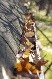 Limpeza da queda - folhas na calha Fotografia de Stock Royalty Free
