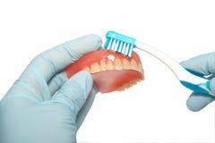 Limpeza do dentes Foto de Stock Royalty Free