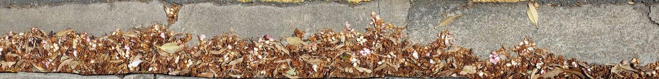 Limpeza do Kerbside exigida Imagens de Stock