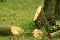 A limpeza no jardim/cortou para trás a árvore no outono imagem de stock