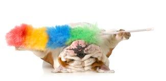 Limpiar el pelo de perro Imagen de archivo