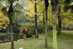Limpiar las hojas de otoño Fotos de archivo libres de regalías