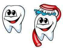 Limpie el diente con el cepillo de dientes Fotos de archivo libres de regalías