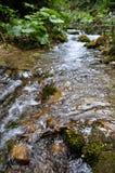 Limpie el río en bosque Imagenes de archivo