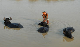 Limpie la India Imagenes de archivo