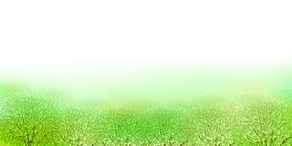 Limpie los ejemplos verdes frescos del fondo Imagen de archivo libre de regalías