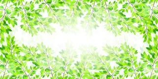 Limpie los ejemplos verdes frescos del fondo Fotografía de archivo libre de regalías
