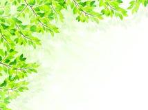Limpie los ejemplos verdes frescos del fondo Imagen de archivo