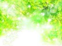 Limpie los ejemplos verdes frescos del fondo Fotografía de archivo