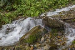 Limpie los flujos de corriente fríos en piedras en la hierba y los arbustos Imagenes de archivo