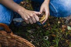 Limpieza de la seta en la cosecha del bosque imágenes de archivo libres de regalías