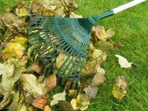 Limpieza de las hojas de otoño Fotografía de archivo libre de regalías
