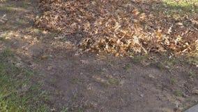 Limpieza del territorio de las hojas en gente del otoño con las escobas, almacen de metraje de vídeo