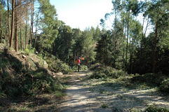 Limpieza Forest Machine Grinding Wood - ambiente Imagen de archivo
