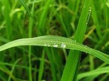 Limpio y verde Imagen de archivo libre de regalías
