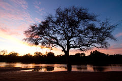 Limpopo River. A dramatic silhouette of a tree next to the Limpopo River Royalty Free Stock Photography