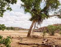 Limpopo Riverbed. A riverbed with low water in Limpopo province, South Africa stock images