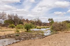 Limpopo Riverbed. A riverbed with low water in Limpopo province, South Africa stock photography