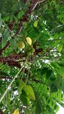 Limsey bär frukt trevliga frukter royaltyfri fotografi