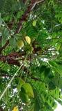Limsey porte des fruits les fruits bons Photographie stock libre de droits
