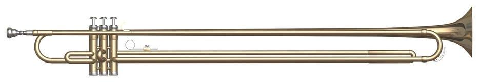 Limu da trombeta Imagem de Stock